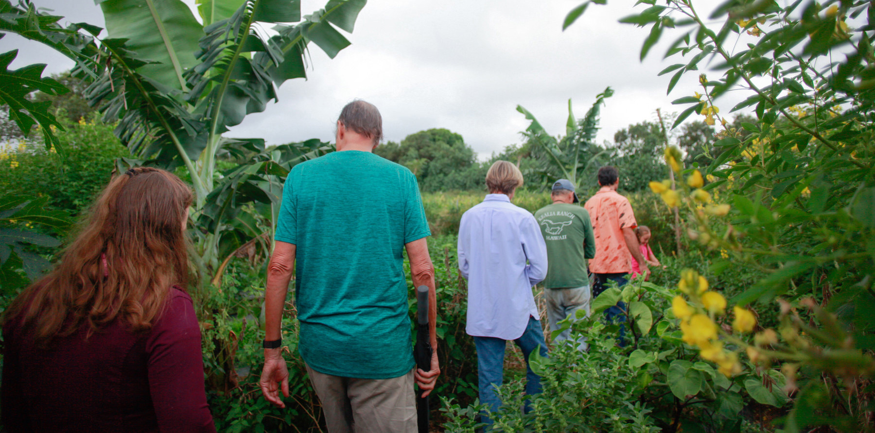 North Kohala Farm Tours   HIP Agriculture at Starseed Ranch